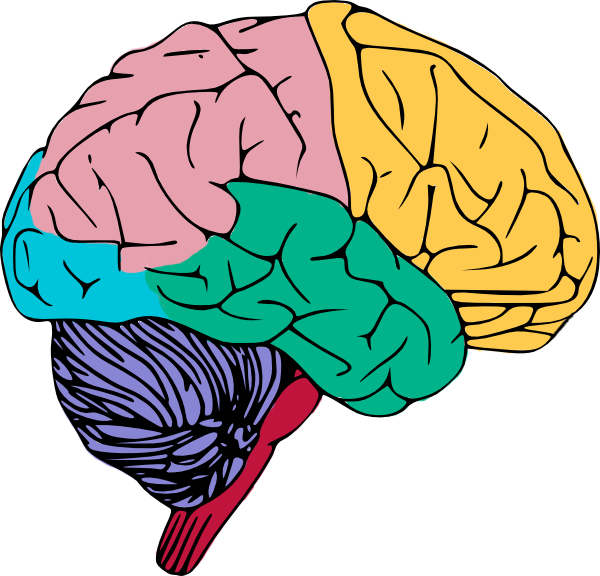 Brain free to use clip art