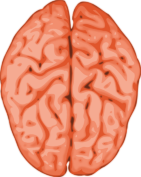 Brain free to use clipart 2