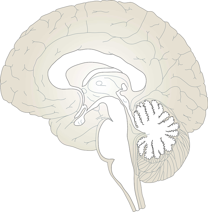Brain free to use cliparts