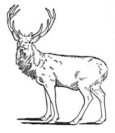 Buck deer graphics andments clipart clipart