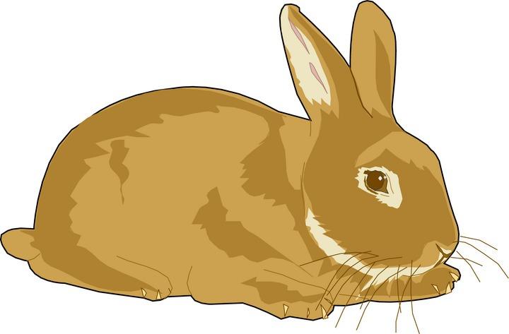 Bunny clipart 2
