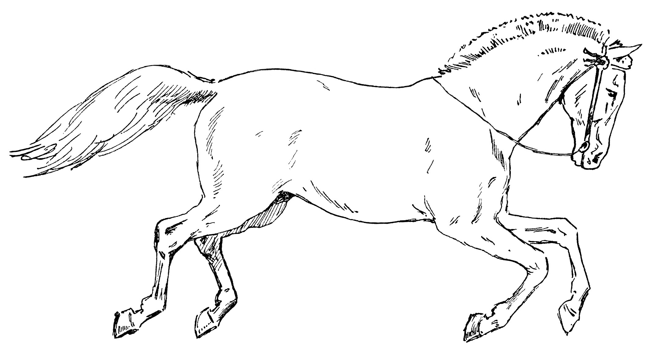 Circus horse clipart black and white