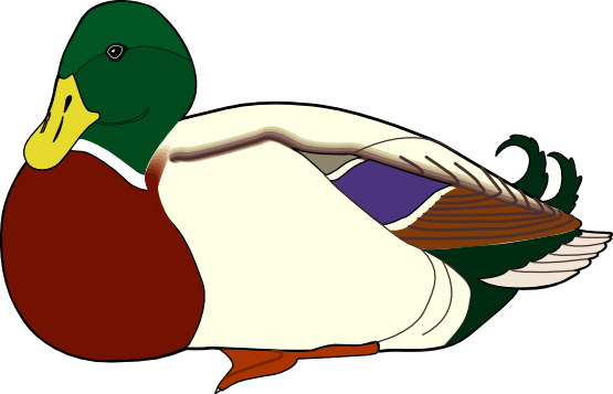 Duck free to use cliparts