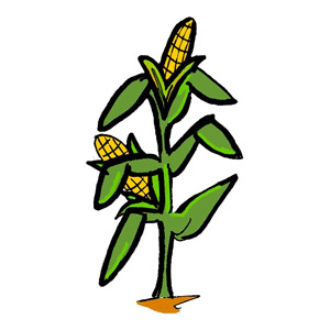 Sweet corn clipart clipartcow