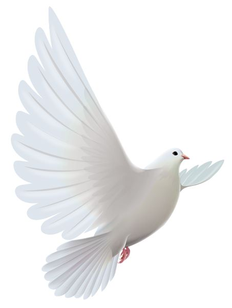 White dove transparent clipart vt white