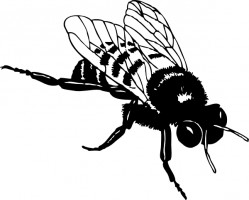 Bumble bee bee clip art free vector in open office drawing svg svg 2