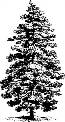 Pine tree clip art free vector in open office drawing svg svg