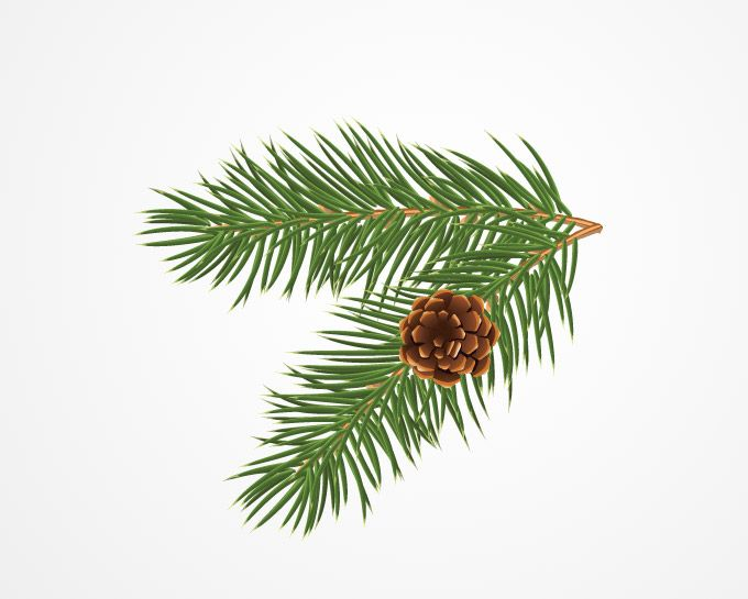Pine tree clip art pine cones illustration free stock