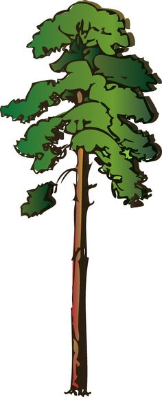 Pine tree clip art trees clipart on album clip art and trees
