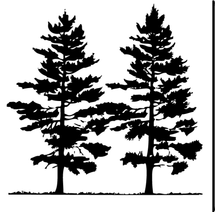 Tats on pine tree tattoo pine tree and pine clip art