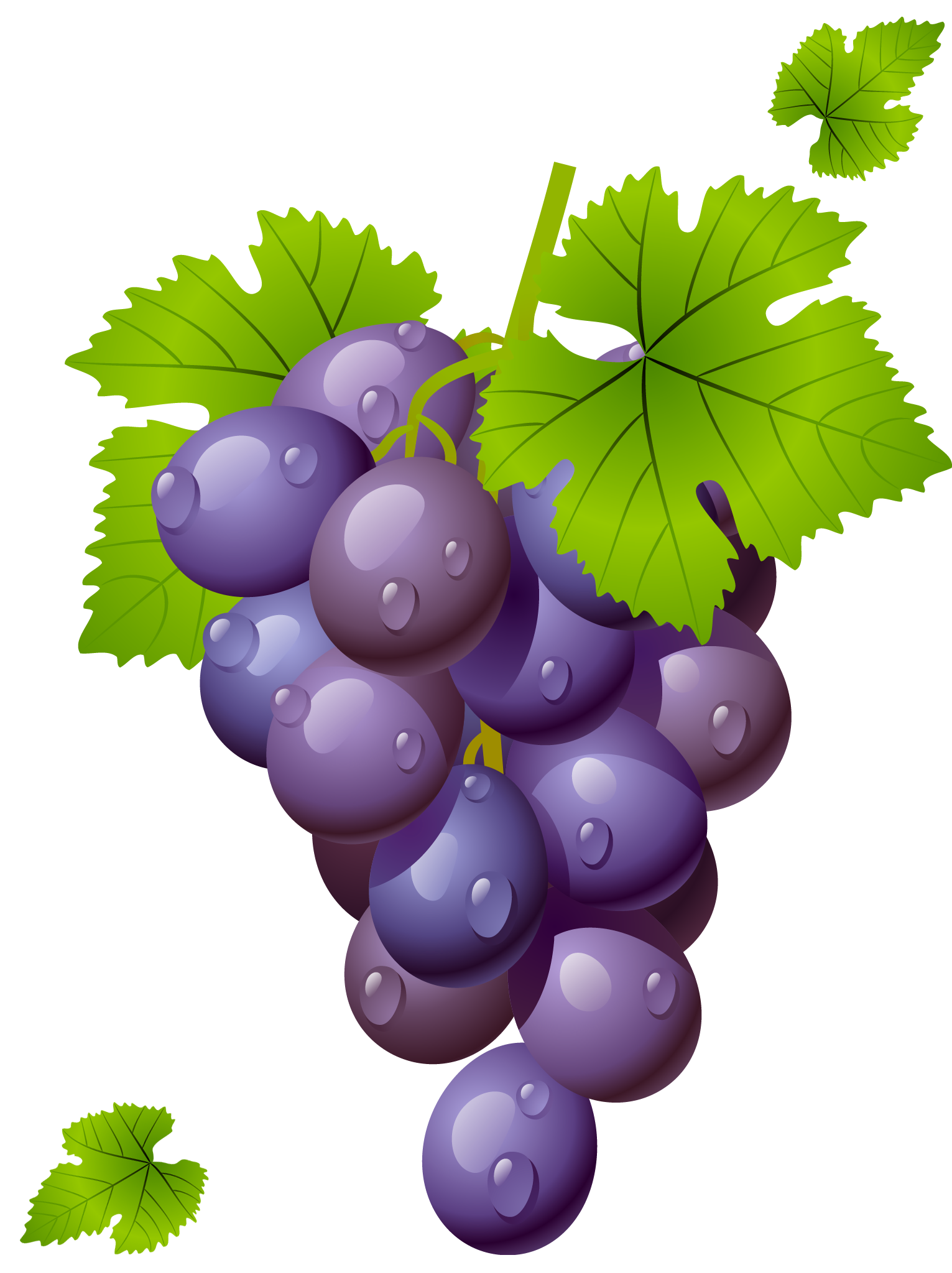 Grapes grape clipart grapeclipart fruit clip art photo 2