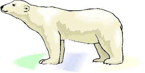 Art polar bear clipart clipart kid 2