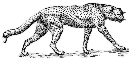 Cheetah outline clipart kid 3