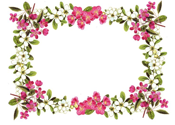 Flower border free printable clip art borders free digital flower