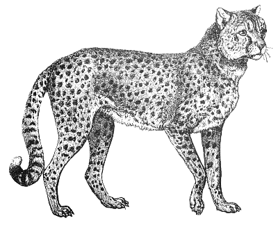 Free cheetah clipart 1 page of public domain clip art 2