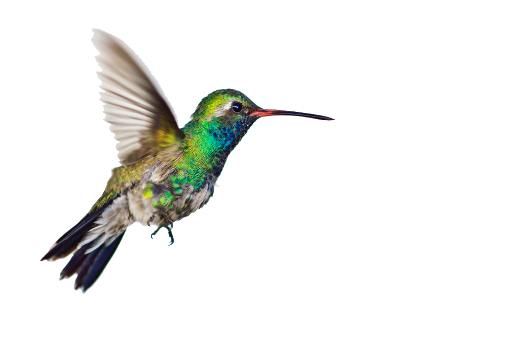 Hummingbird transparent images all cliparts
