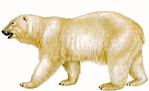 Polar bear clipart 2