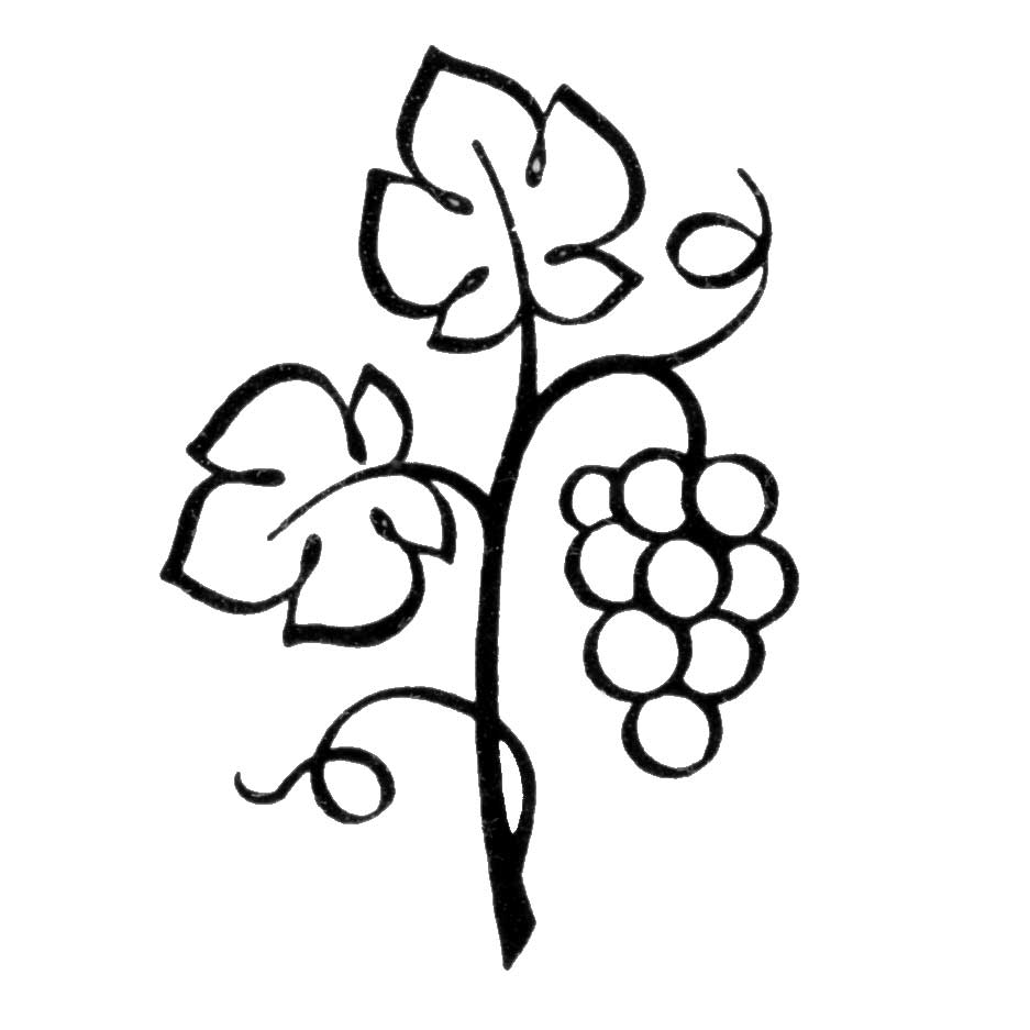 Grapes vine clipart free images