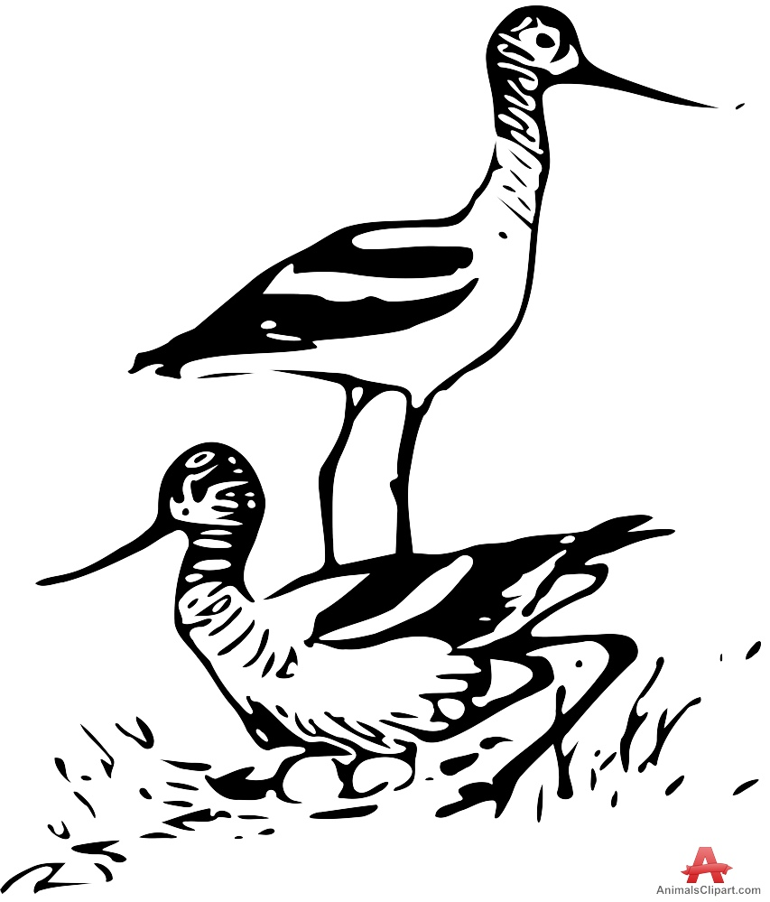 Avocet birds in nature clipart free design download