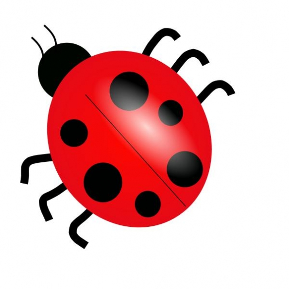 Bugs and insects clipart kid