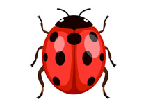 Free insect clipart clip art pictures graphics illustrations 2