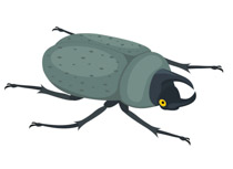 Free insect clipart clip art pictures graphics illustrations 7