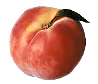 Free peach clipart 1 page of public domain clip art 2