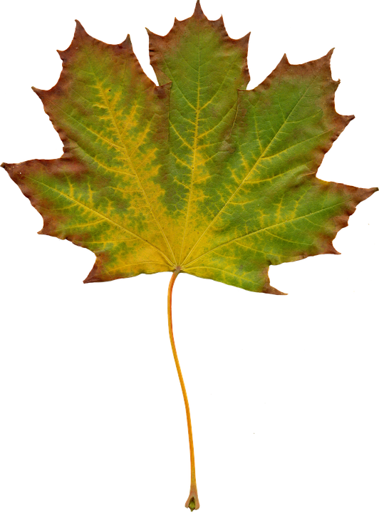 Free photo leaves nature autumn clipart image on