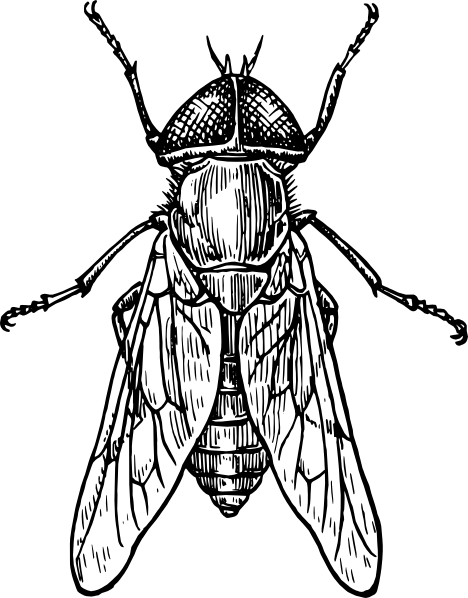 Insect clipart black and white free images 6