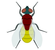 Insect free animal clipart clip art pictures graphics and illustrations