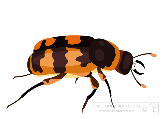 Insect search results for bug beetle pictures graphics clipart