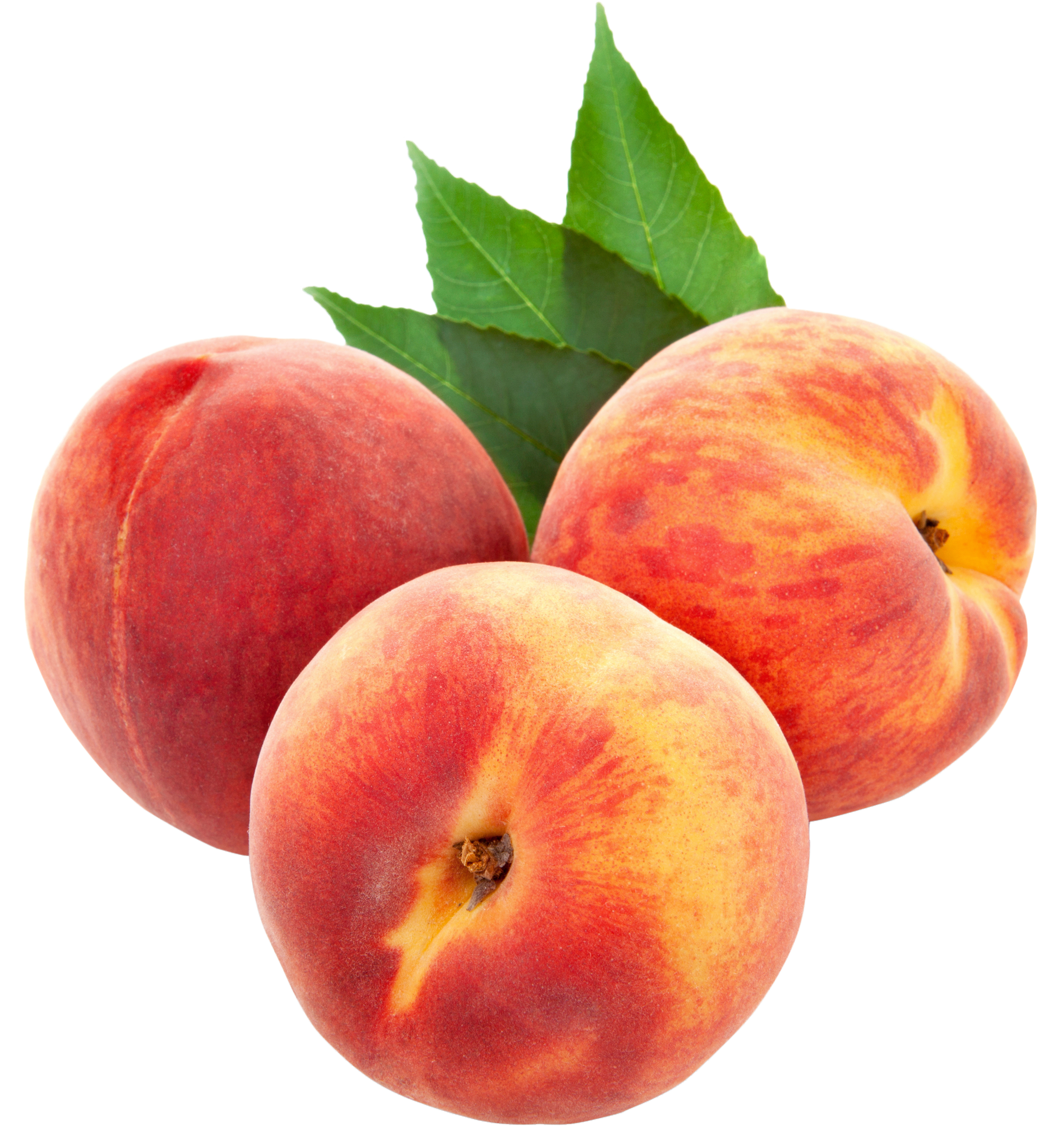 Peach clipart for you image