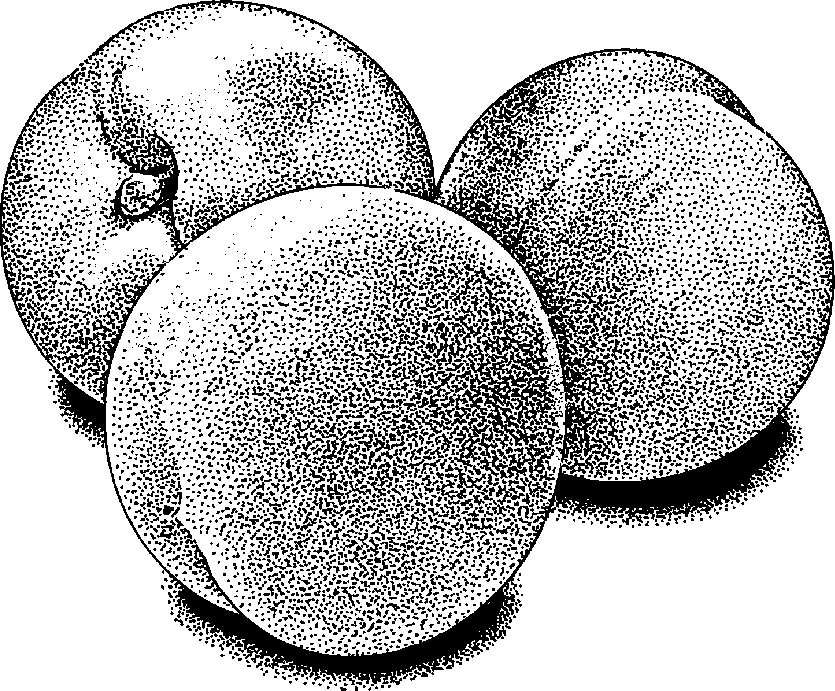 Peach free to use clipart image