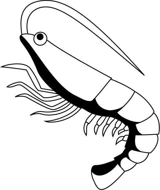 Shrimp clip art related keywords