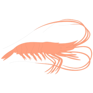 Shrimp clipart cliparts of free download wmf emf 2