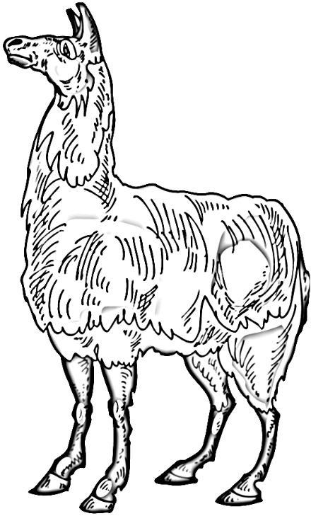 Llama clipart 6 2
