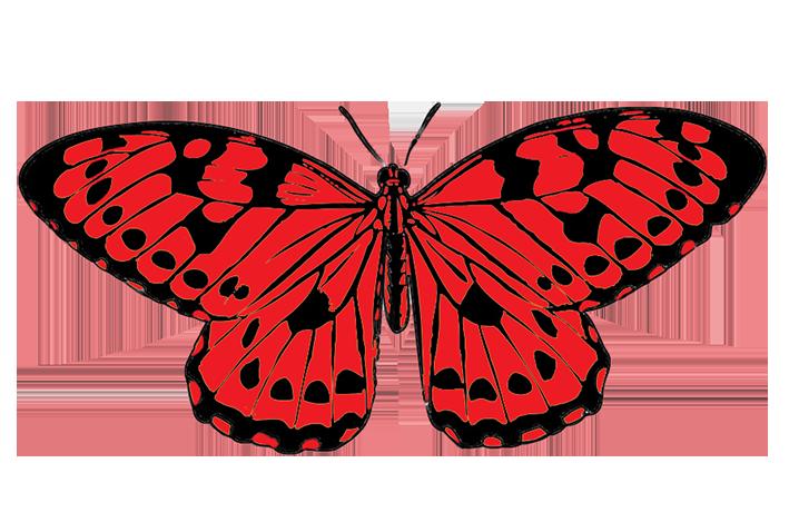 Butterflies butterfly clipart 5