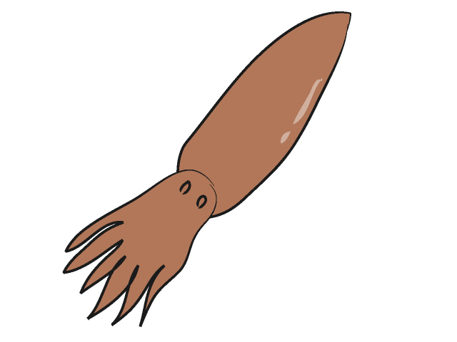 Squid clipart 10