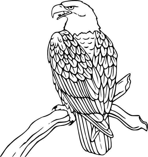 Bald eagle clip art free vector in open office drawing svg