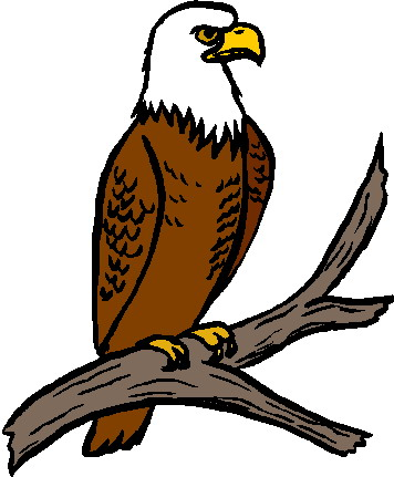 Bald eagle clip art related keywords