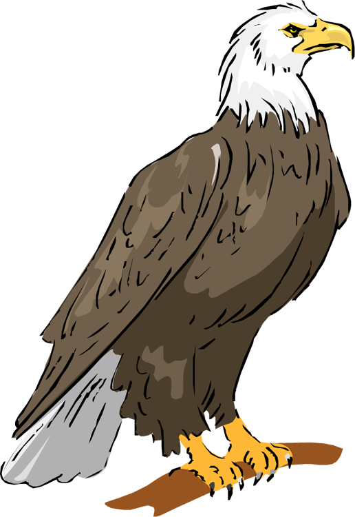 Bald eagle eagle clipart
