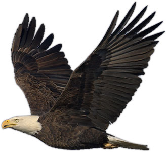 Bald eagle free eagle clip art pictures 4