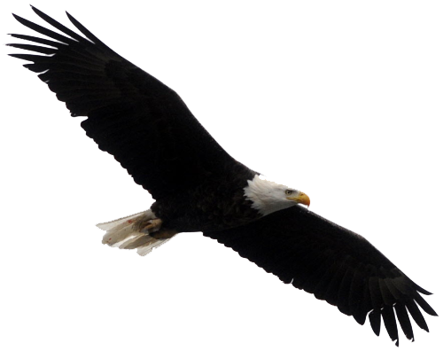 Bald eagle transparent images free download clip art