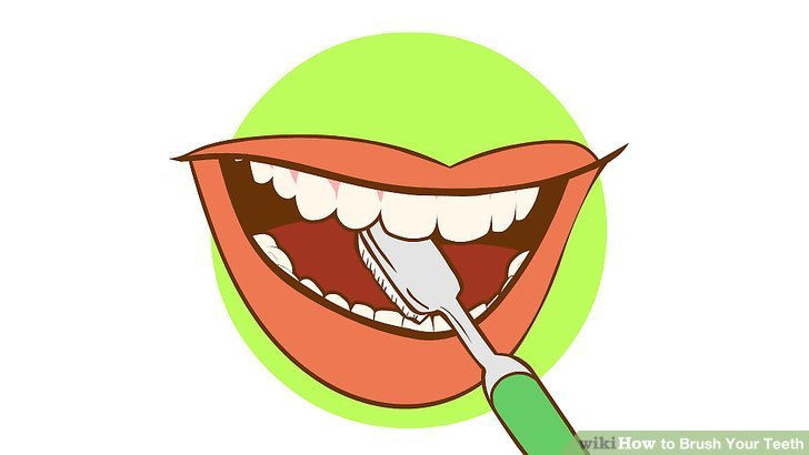Brush teeth how to brush your teeth st with pictures wikihow clipart