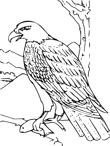 Coloring book bald eagle clip art free vector in open office