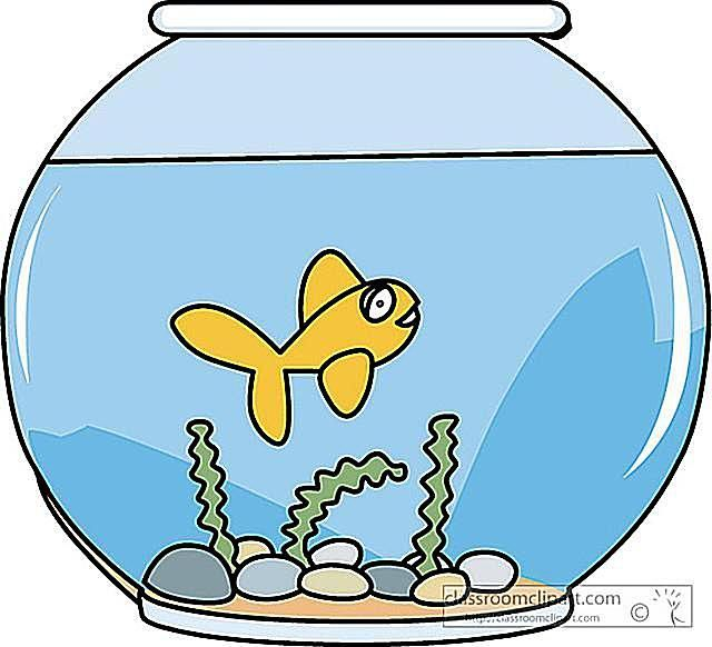 Fish bowl fish in clip art at clker vector image famclipart