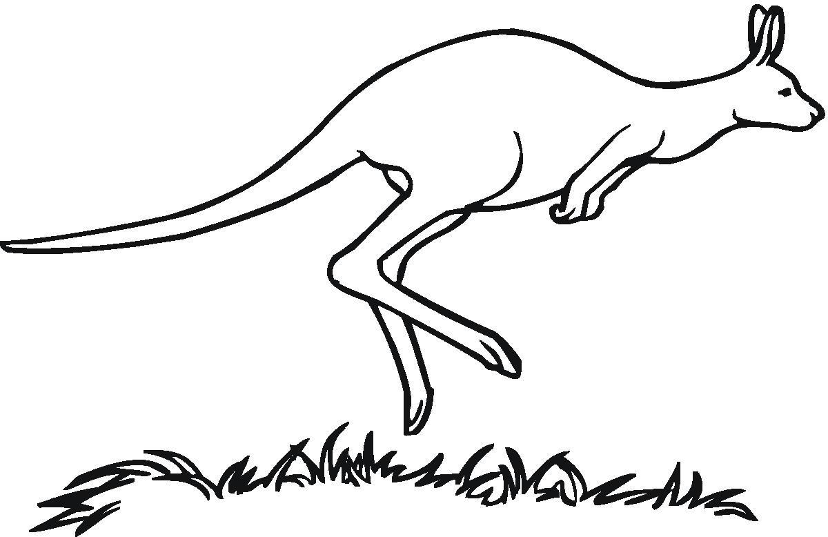 Kangaroo clip art kangaroo clipart fans 4 clipartandscrap