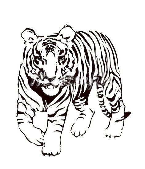 Tiger black and white tiger face clip art free