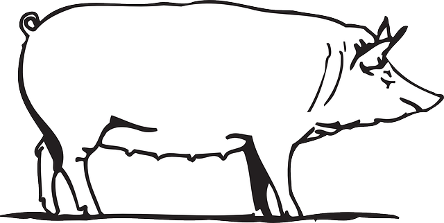barn outline Outline drawing barn farm pig art animal png
