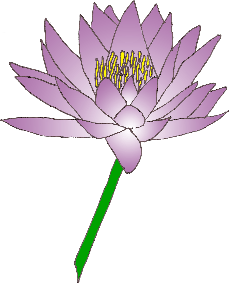 Water lily cliparts png
